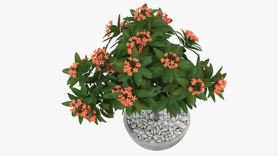 Rośliny ozdobne w doniczkach royalty-free 3d model - Preview no. 6