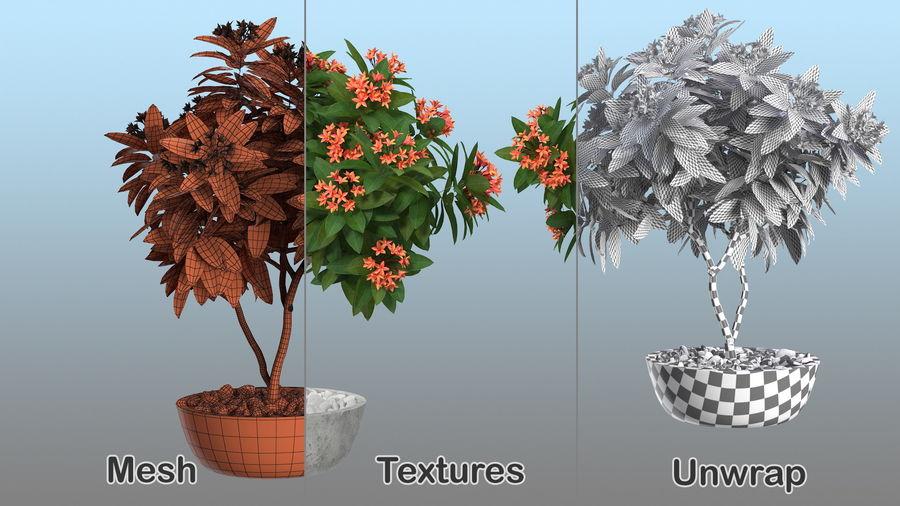 Rośliny ozdobne w doniczkach royalty-free 3d model - Preview no. 5