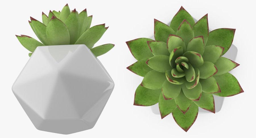 Rośliny ozdobne w doniczkach royalty-free 3d model - Preview no. 20