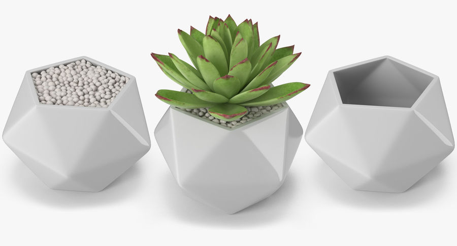 Rośliny ozdobne w doniczkach royalty-free 3d model - Preview no. 18