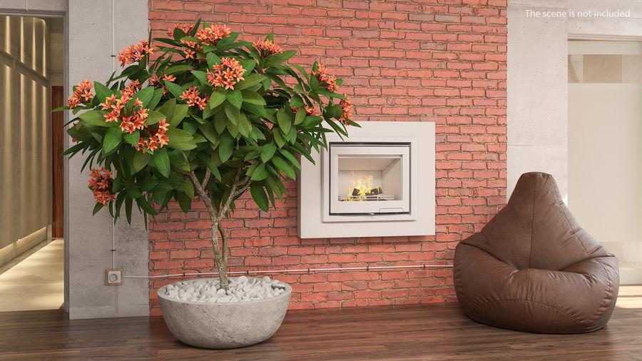 Rośliny ozdobne w doniczkach royalty-free 3d model - Preview no. 4