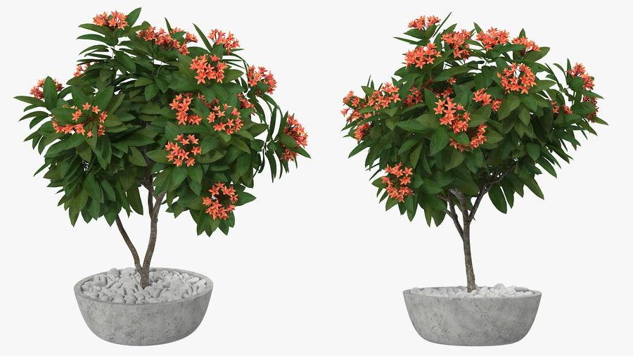 Rośliny ozdobne w doniczkach royalty-free 3d model - Preview no. 3