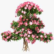Bonsaï avec des fleurs 3d model