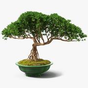鍋に小さな盆栽 3d model