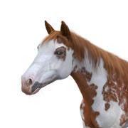 Cavalo Malhado 3d model