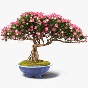 Miniature Green Bonsai Tree with Flowers in Pot 3d model