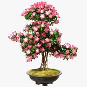 Kleiner Bonsai-Baum mit Blumen im Topf 3d model