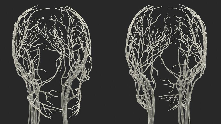 Anatomie du système cardiovasculaire féminin royalty-free 3d model - Preview no. 34