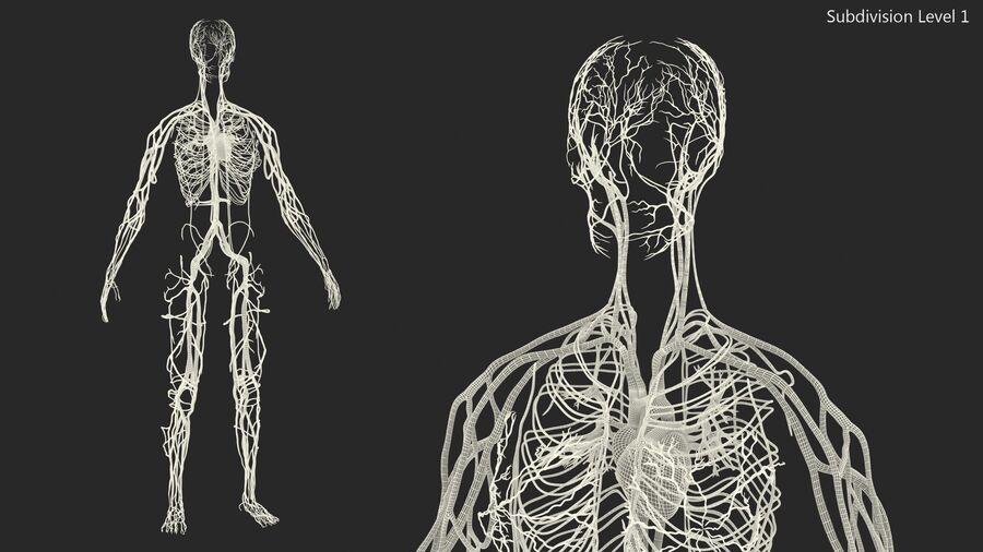 Anatomie du système cardiovasculaire féminin royalty-free 3d model - Preview no. 25