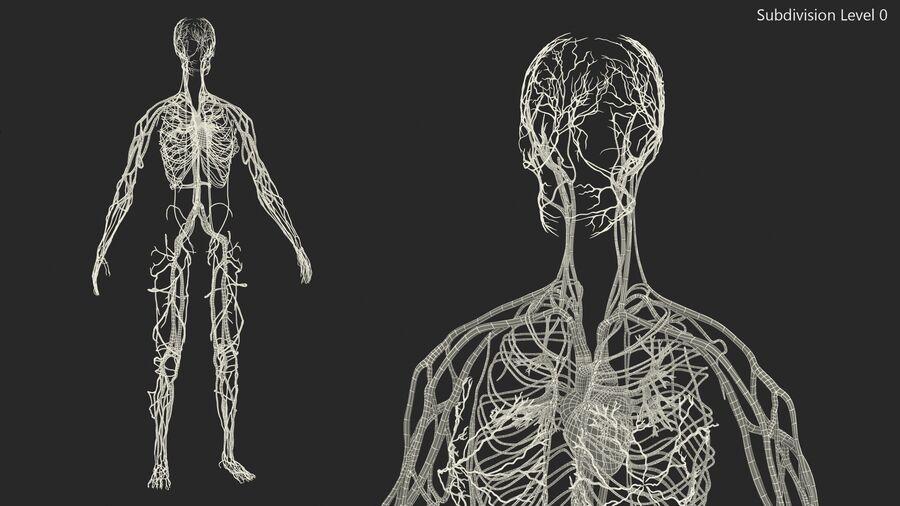 Anatomie du système cardiovasculaire féminin royalty-free 3d model - Preview no. 24