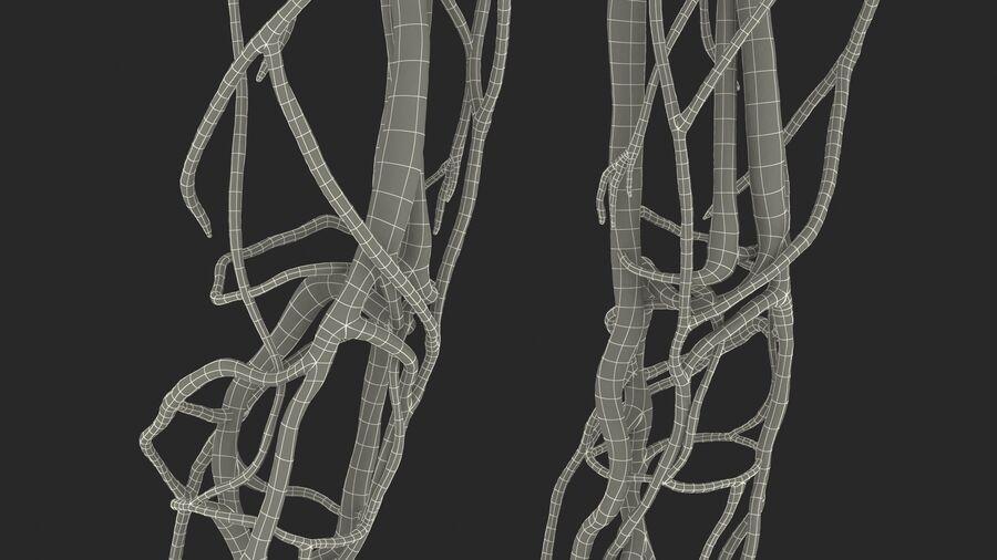 Anatomie du système cardiovasculaire féminin royalty-free 3d model - Preview no. 37