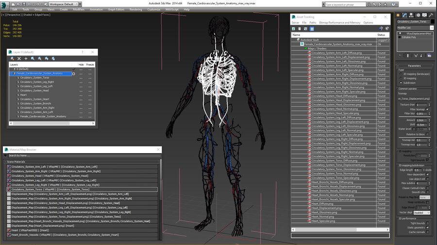 Anatomie du système cardiovasculaire féminin royalty-free 3d model - Preview no. 28