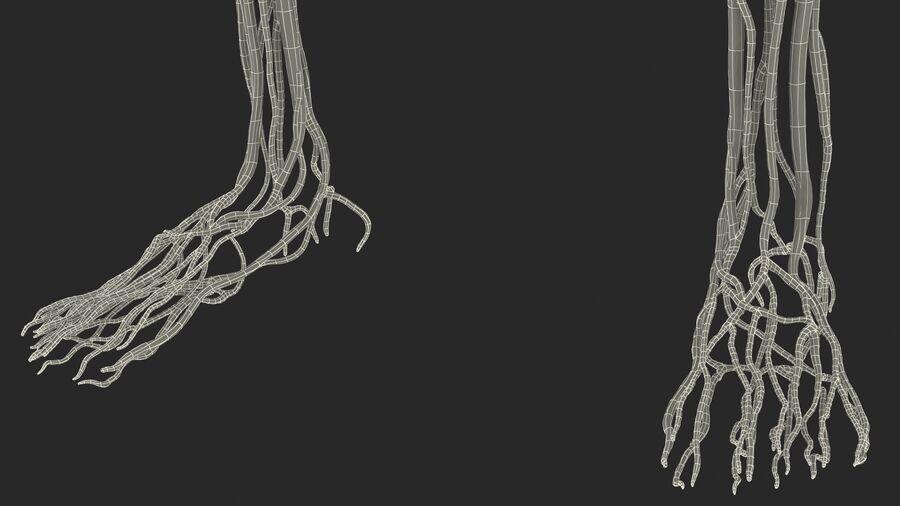 Anatomie du système cardiovasculaire féminin royalty-free 3d model - Preview no. 38