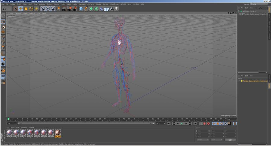 Anatomie du système cardiovasculaire féminin royalty-free 3d model - Preview no. 30