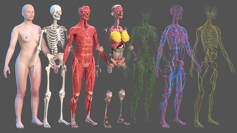 Volledige anatomie van het vrouwelijk lichaam royalty-free 3d model - Preview no. 3