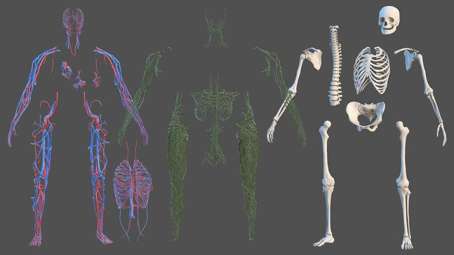 Volledige anatomie van het vrouwelijk lichaam royalty-free 3d model - Preview no. 9