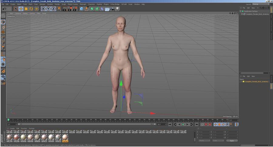 Volledige anatomie van het vrouwelijk lichaam royalty-free 3d model - Preview no. 61