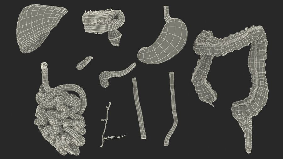 Volledige anatomie van het vrouwelijk lichaam royalty-free 3d model - Preview no. 72