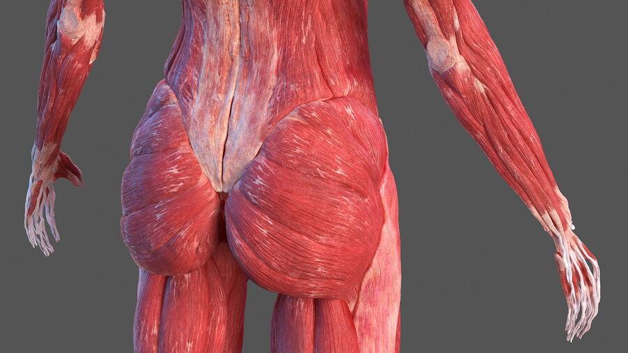 Volledige anatomie van het vrouwelijk lichaam royalty-free 3d model - Preview no. 27