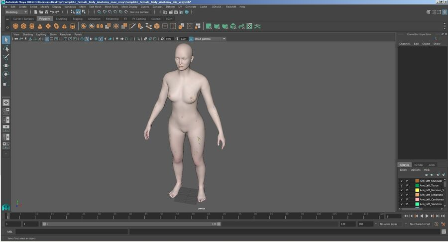 Volledige anatomie van het vrouwelijk lichaam royalty-free 3d model - Preview no. 62