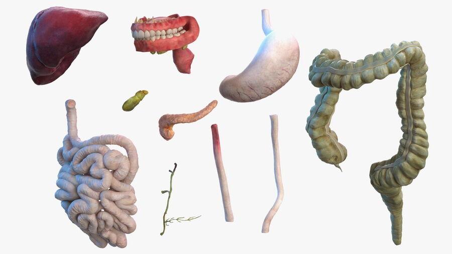 Volledige anatomie van het vrouwelijk lichaam royalty-free 3d model - Preview no. 34