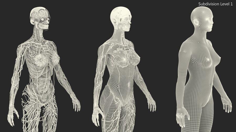 Volledige anatomie van het vrouwelijk lichaam royalty-free 3d model - Preview no. 55
