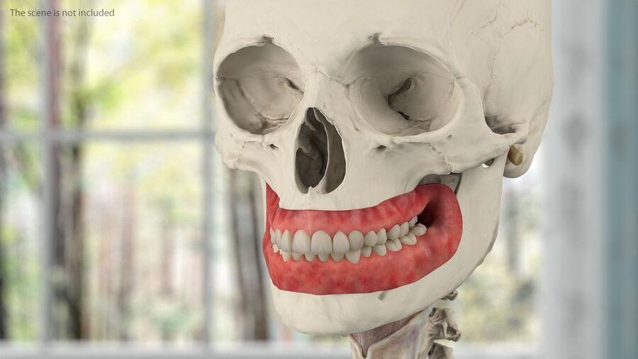 Volledige anatomie van het vrouwelijk lichaam royalty-free 3d model - Preview no. 35