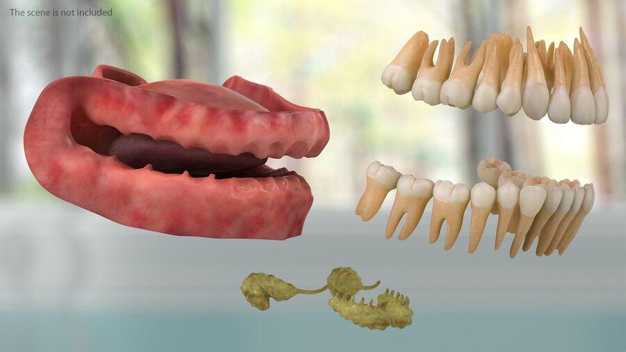 Volledige anatomie van het vrouwelijk lichaam royalty-free 3d model - Preview no. 37