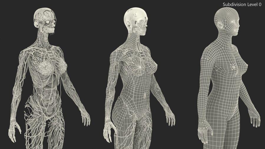 Volledige anatomie van het vrouwelijk lichaam royalty-free 3d model - Preview no. 54