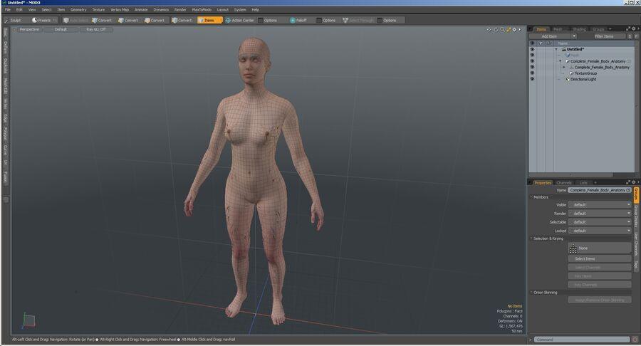 Volledige anatomie van het vrouwelijk lichaam royalty-free 3d model - Preview no. 63