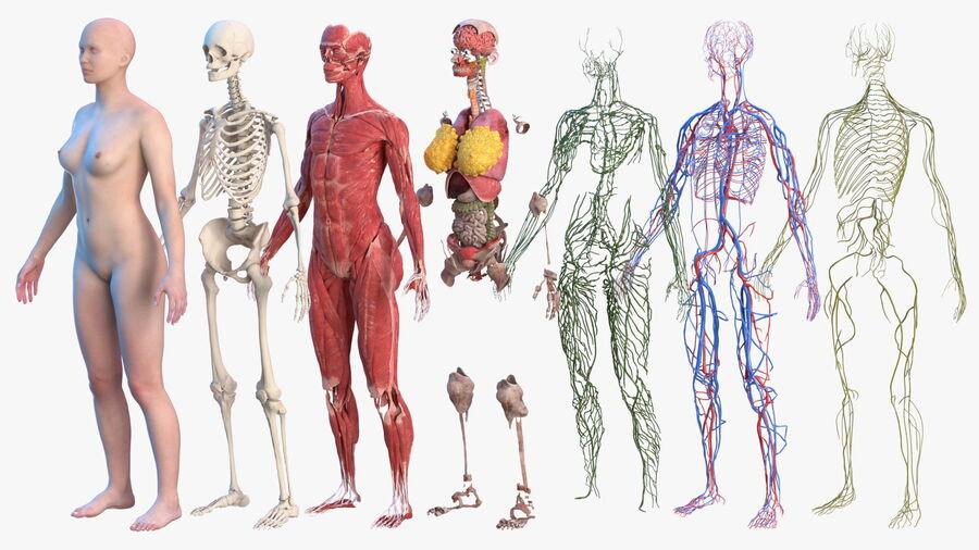 Volledige anatomie van het vrouwelijk lichaam royalty-free 3d model - Preview no. 4