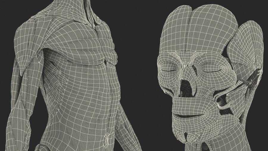 Volledige anatomie van het vrouwelijk lichaam royalty-free 3d model - Preview no. 65