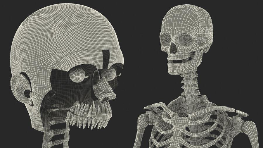 Volledige anatomie van het vrouwelijk lichaam royalty-free 3d model - Preview no. 66
