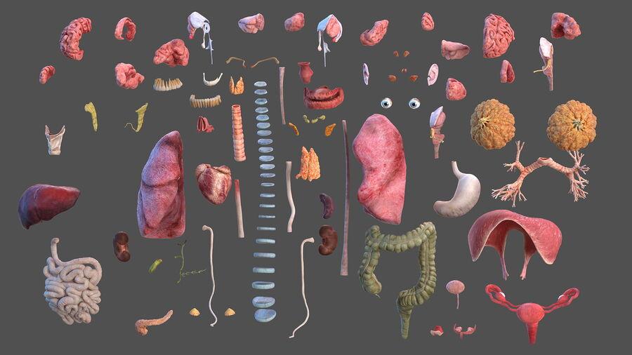 Volledige anatomie van het vrouwelijk lichaam royalty-free 3d model - Preview no. 8