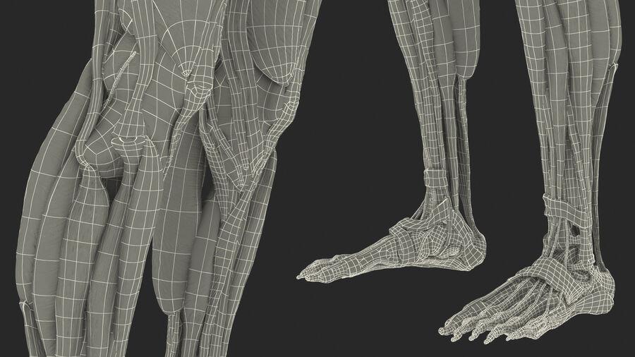 Volledige anatomie van het vrouwelijk lichaam royalty-free 3d model - Preview no. 69