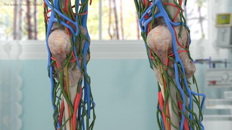 Volledige anatomie van het vrouwelijk lichaam royalty-free 3d model - Preview no. 40