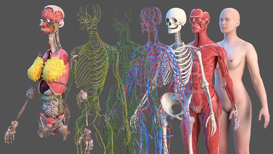 Volledige anatomie van het vrouwelijk lichaam royalty-free 3d model - Preview no. 5