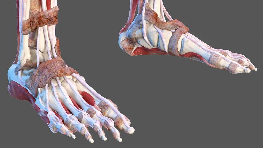 Volledige anatomie van het vrouwelijk lichaam royalty-free 3d model - Preview no. 44