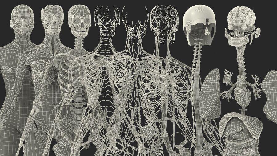Volledige anatomie van het vrouwelijk lichaam royalty-free 3d model - Preview no. 64