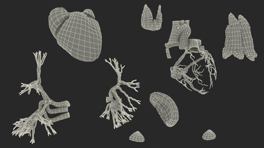 Volledige anatomie van het vrouwelijk lichaam royalty-free 3d model - Preview no. 73