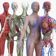 Complete Female Body Anatomy 3d model