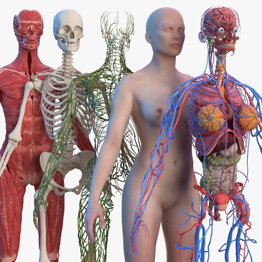 Volledige anatomie van het vrouwelijk lichaam royalty-free 3d model - Preview no. 1