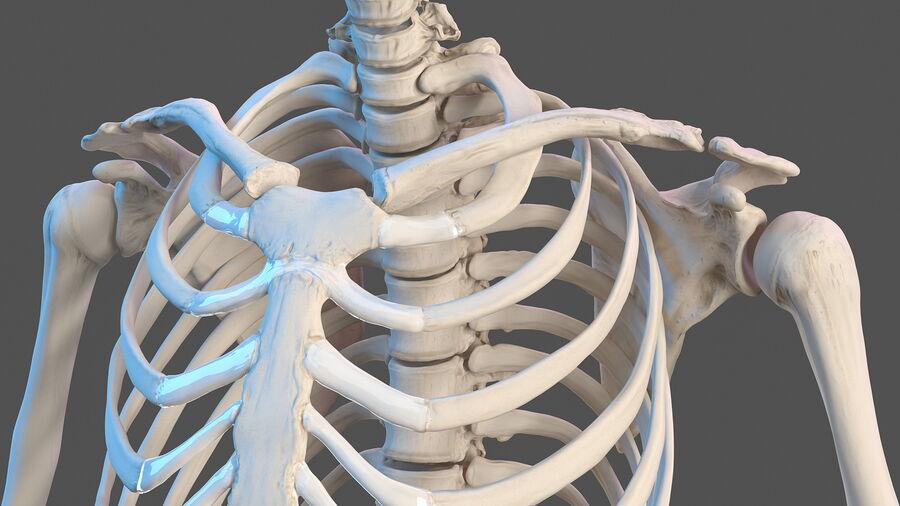 Volledige anatomie van het vrouwelijk lichaam royalty-free 3d model - Preview no. 42