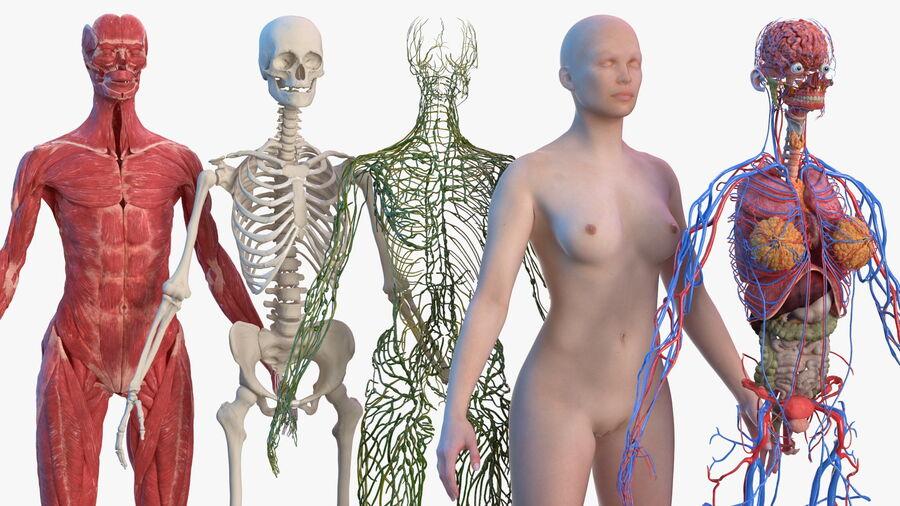 Volledige anatomie van het vrouwelijk lichaam royalty-free 3d model - Preview no. 2