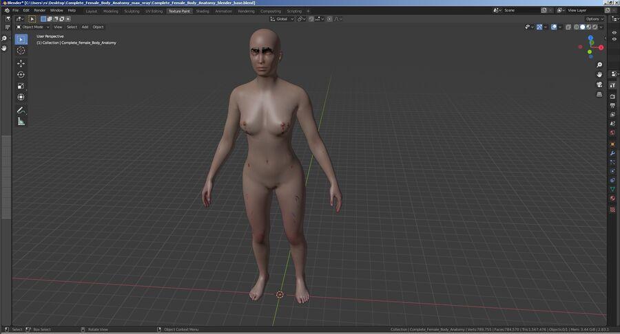 Volledige anatomie van het vrouwelijk lichaam royalty-free 3d model - Preview no. 60