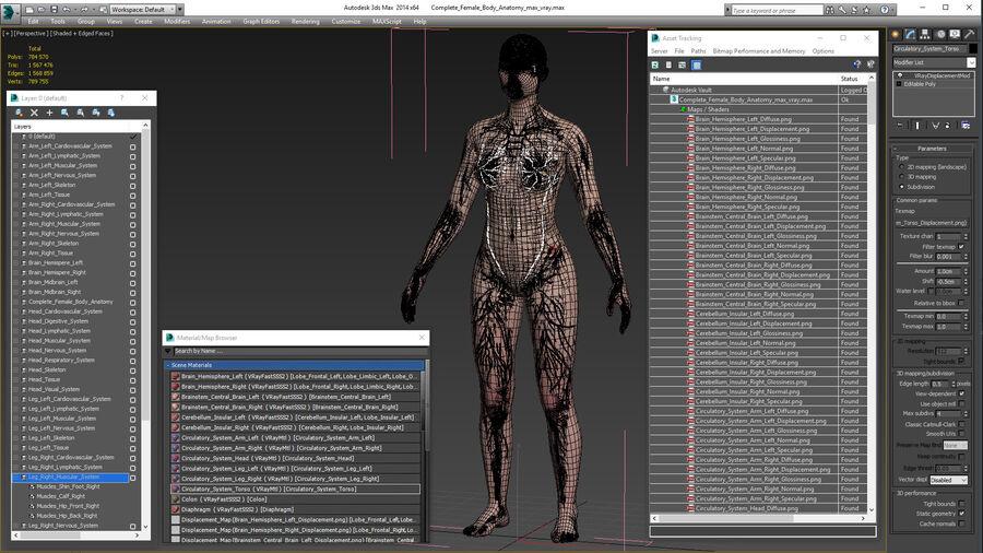 Volledige anatomie van het vrouwelijk lichaam royalty-free 3d model - Preview no. 59