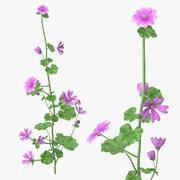 锦葵植物 3d model