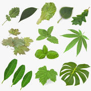 Leaves Collection 8 3d model