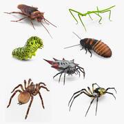 Collection d'insectes rampants gréés 3d model