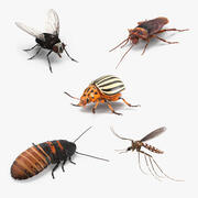 Коллекция насекомых-вредителей 3d model